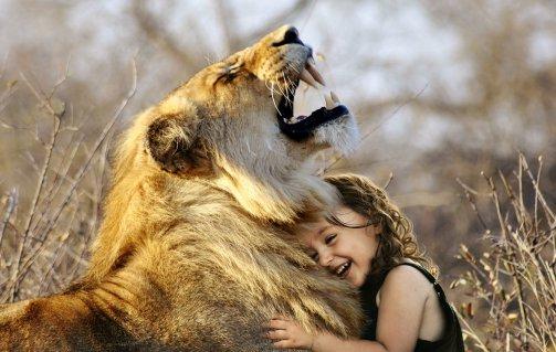 lion-3012515
